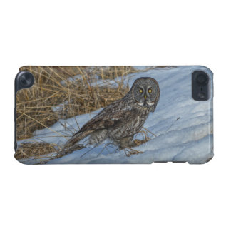 Great Grey Owl & Snow Wildlife Photo Portrait iPod Touch (5th Generation) Covers