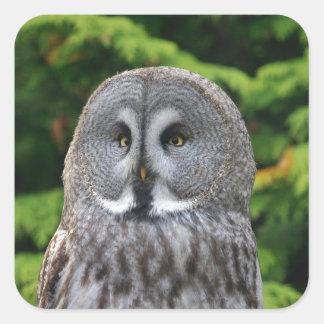 Great Grey Owl Square Sticker