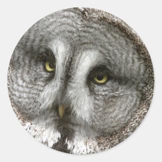 Great Grey Owl Stickers