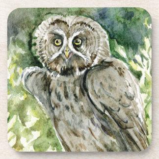 Great Grey Owl watercolor Drink Coasters