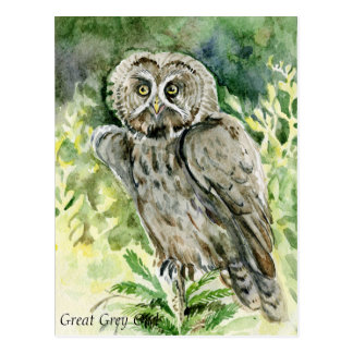 Great Grey Owl watercolor Postcard
