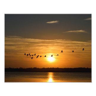 Great Herons At Sunset Photo Print