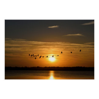 Great Herons At Sunset Poster