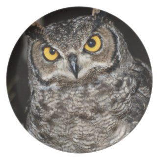 Great Horned Owl  2 Plate