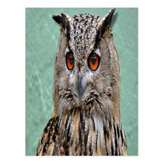 Great Horned Owl 7 Postcard
