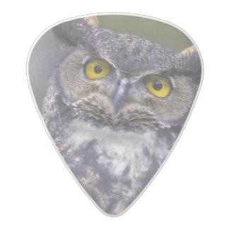 Great Horned Owl Acetal Guitar Pick