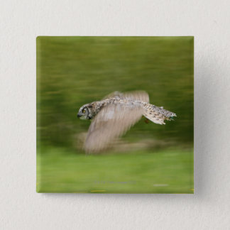 Great Horned Owl (Bubo virginianus) 15 Cm Square Badge