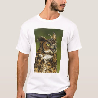 Great Horned Owl, Bubo virginianus, Captive 2 T-Shirt
