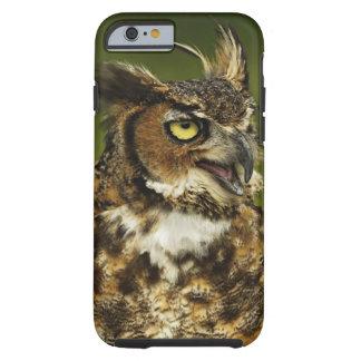 Great Horned Owl, Bubo virginianus, Captive 2 Tough iPhone 6 Case