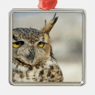 Great Horned Owl (Bubo virginianus), captive Christmas Ornament