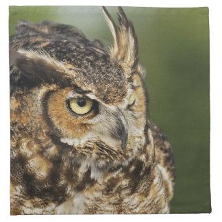 Great Horned Owl, Bubo virginianus, Captive Napkin