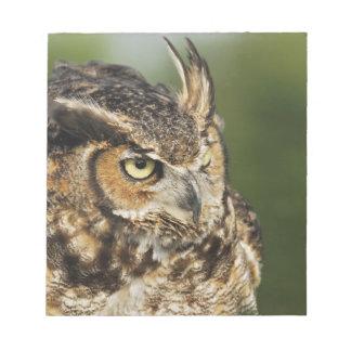 Great Horned Owl, Bubo virginianus, Captive Notepad