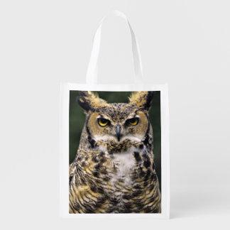 Great Horned Owl (Bubo virginianus), full body