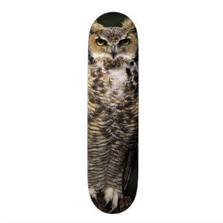 Great Horned Owl (Bubo virginianus), full body 21.6 Cm Old School Skateboard Deck