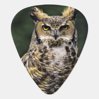 Great Horned Owl (Bubo virginianus), full body Guitar Pick