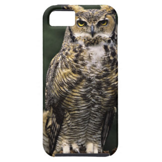 Great Horned Owl (Bubo virginianus), full body iPhone 5 Covers