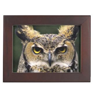 Great Horned Owl (Bubo virginianus), full body Keepsake Box