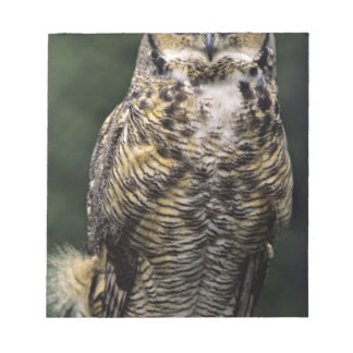 Great Horned Owl (Bubo virginianus), full body Notepad