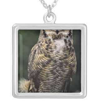 Great Horned Owl (Bubo virginianus), full body Silver Plated Necklace