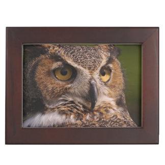 Great Horned Owl, Bubo virginianus Keepsake Box
