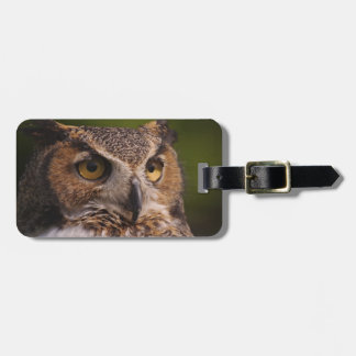 Great Horned Owl, Bubo virginianus Luggage Tag