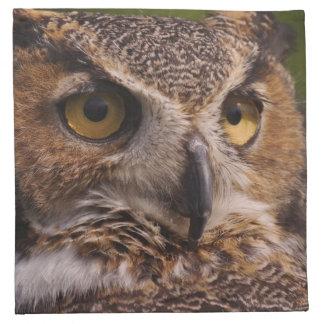 Great Horned Owl, Bubo virginianus Napkin