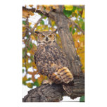 Great Horned Owl, Bubo virginianus, Native to Art Photo