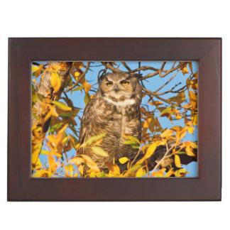 Great Horned Owl (Bubo Virginianus) Sleeping Keepsake Box