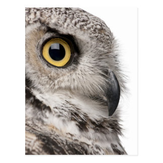 Great Horned Owl - Bubo Virginianus Subarcticus Postcard
