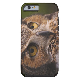 Great Horned Owl, Bubo virginianus Tough iPhone 6 Case