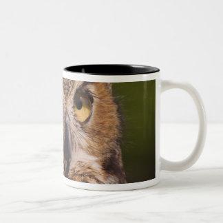 Great Horned Owl, Bubo virginianus Two-Tone Coffee Mug