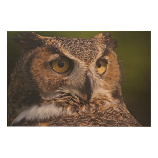 Great Horned Owl, Bubo virginianus Wood Print