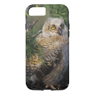 Great Horned Owl, Bubo virginianus, young in iPhone 8/7 Case