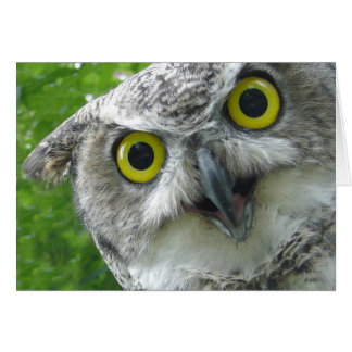 Great-Horned Owl Card