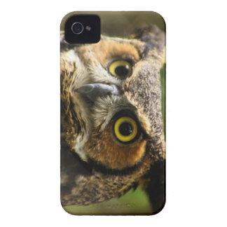 Great Horned Owl Case