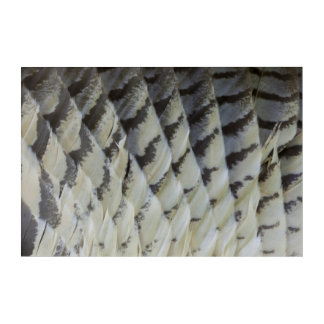 Great Horned Owl Feather Design Acrylic Wall Art
