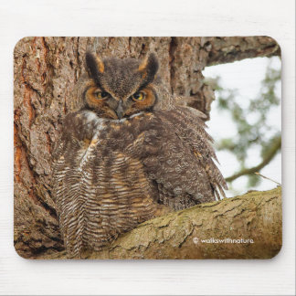 Great Horned Owl in the Douglas Fir Mouse Pad