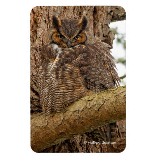 Great Horned Owl in the Douglas Fir Rectangular Photo Magnet