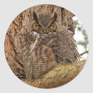 Great Horned Owl in the Douglas Fir Round Sticker