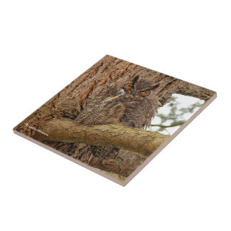 Great Horned Owl in the Douglas Fir Small Square Tile
