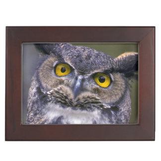 Great Horned Owl Keepsake Box