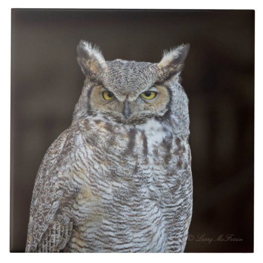 Great Horned Owl Large Square Tile