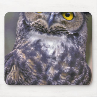 Great Horned Owl Mouse Mat