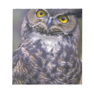 Great Horned Owl Notepad