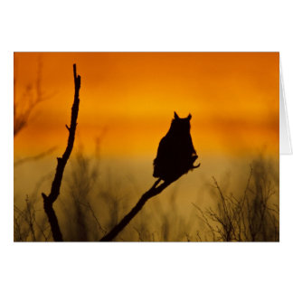 Great Horned Owl perched at sunset Card