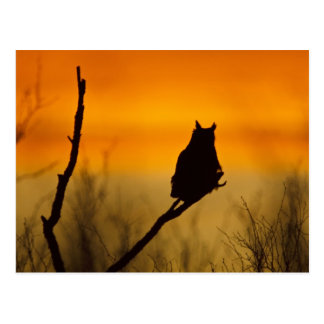 Great Horned Owl perched at sunset Postcard