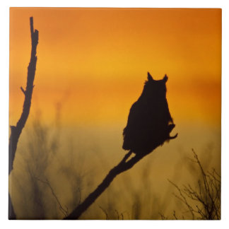 Great Horned Owl perched at sunset Tile