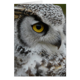Great Horned Owl Photograph Greeting Card