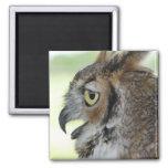 Great Horned Owl Portrait Magnets