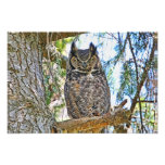 Great Horned Owl Staring Photograph